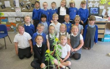 Sunflower Challenge!