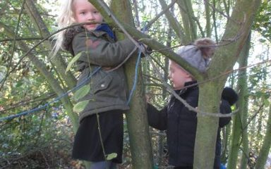 Forest school adventures